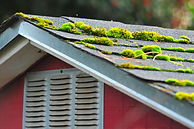 Moss on roof. Roof Washing.