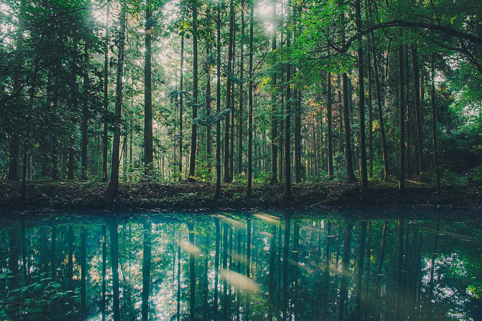 _Morning sunshine hits an emerald green lake.jpg