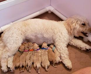 Angel and her Babies.jpeg