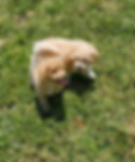 penny puppy pics 2.jpg
