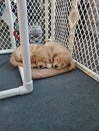 penny puppy pics 1.jpg