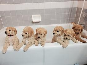 penny puppy pics 4.jpeg