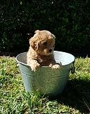 Lucy 7 weeks (Aria).jpg