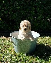 Riley 7 weeks (Ava).jpg