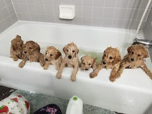Angel and arrows litter in the tub.jpg
