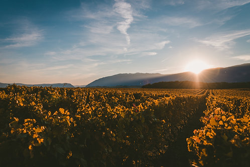 Days of Wine and Rose (Tour of Italy)