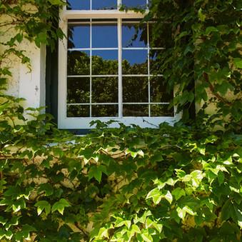 New garden shot 4.JPEG