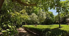 New garden shot 3.JPEG