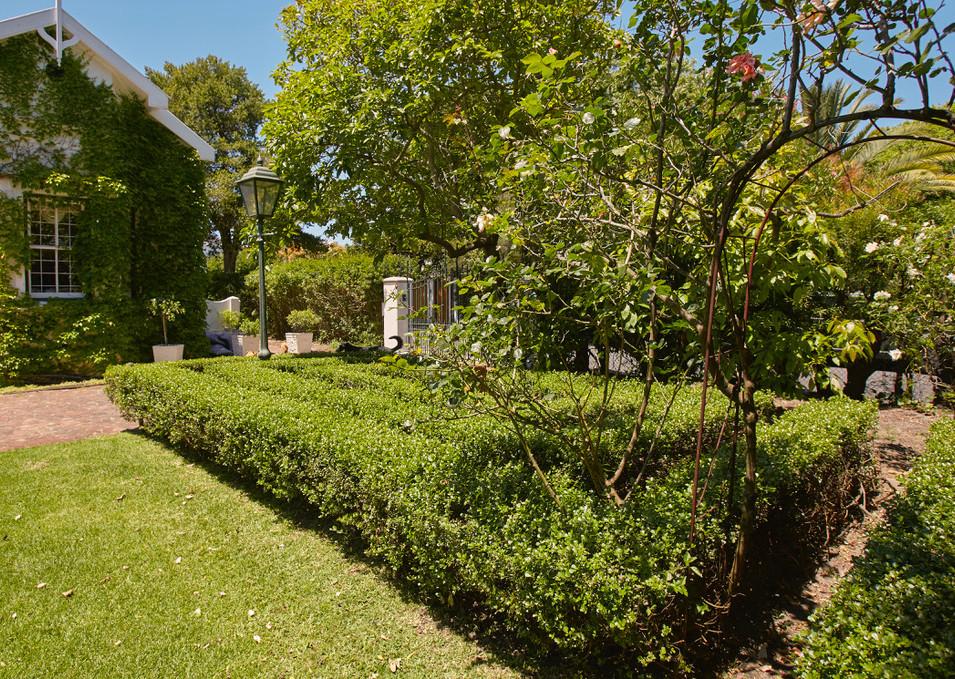 New garden shot 2.JPEG