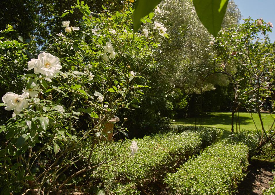 New garden shot.JPEG