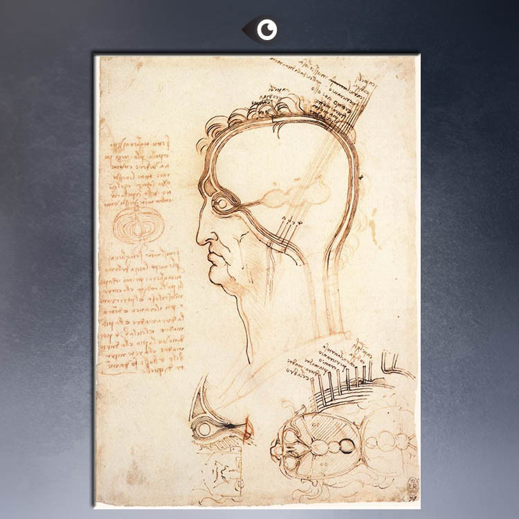 comparison-of-scalp-skin-and-onion-1489-50x75.jpg