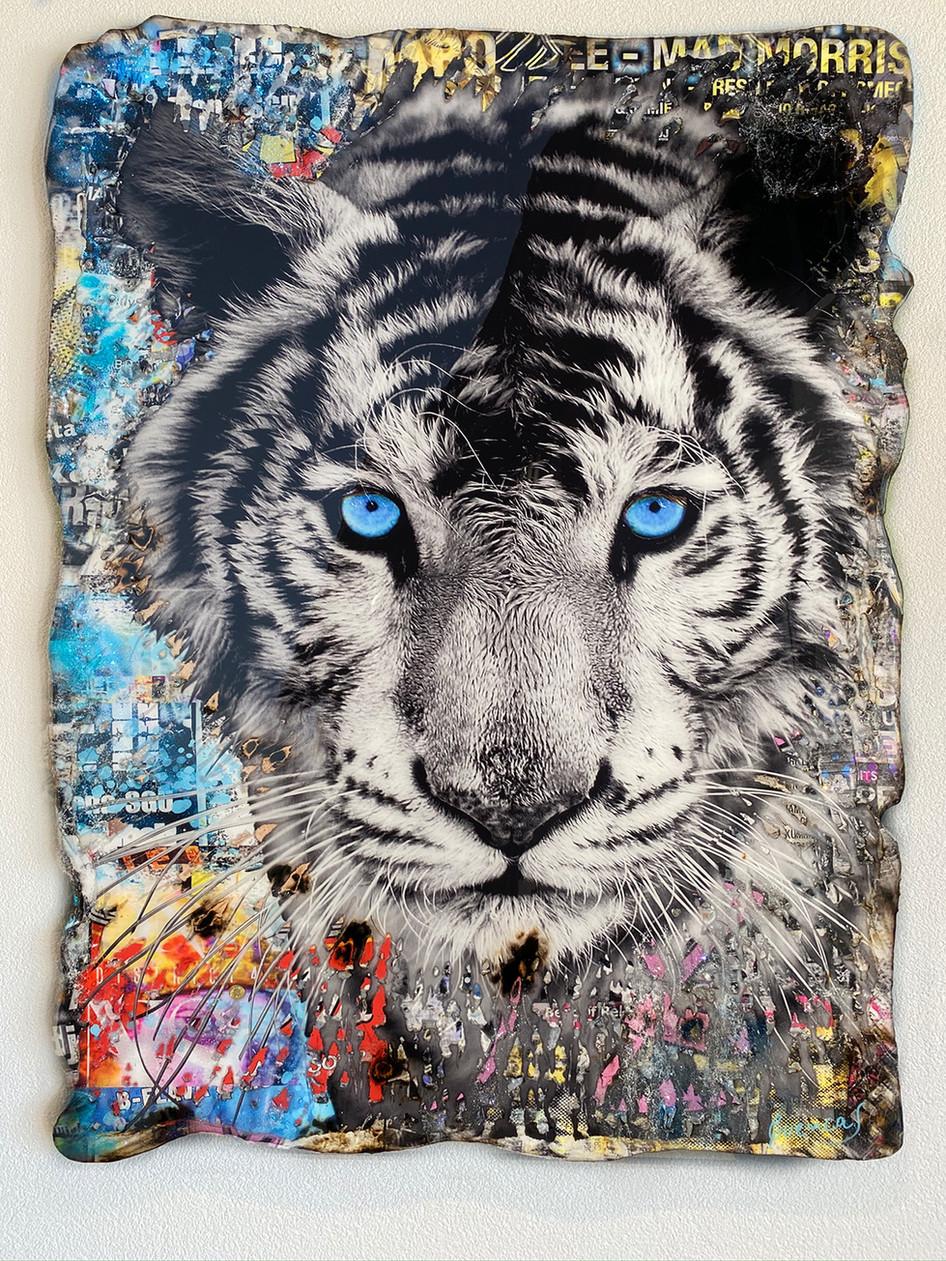 Blue Eyes Tiger (SOLD)