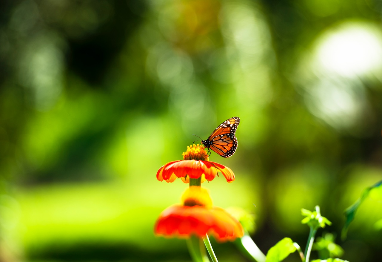 Spring_butterfly_52x76