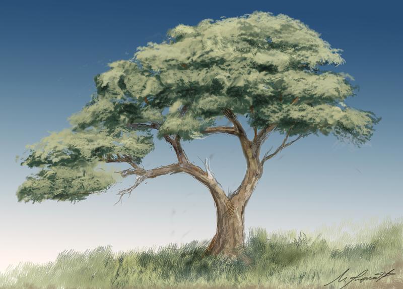 bonsai50x70.jpg