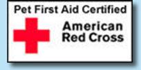 first+aid+.jpg