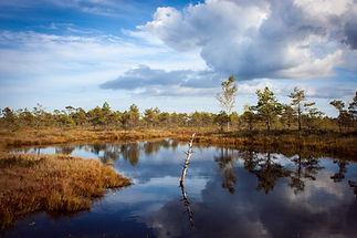 Réflexion dans un étang