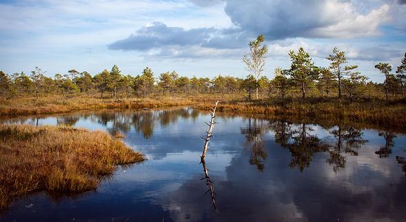 Reflektion i en damm