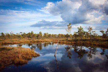 Reflexion in einem Teich