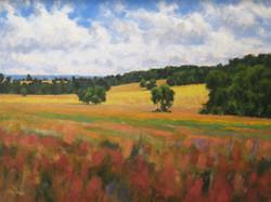 295- Yellow Field 18x24