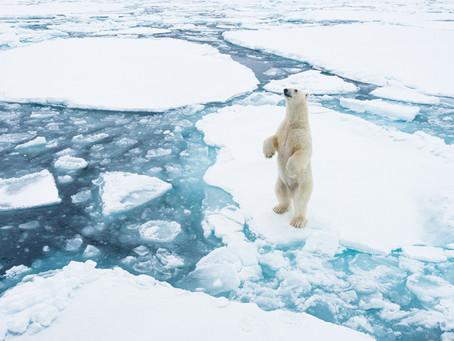 The Arctic القطب الشمالي
