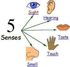 Using the Senses