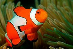 Fish Picture Quiz