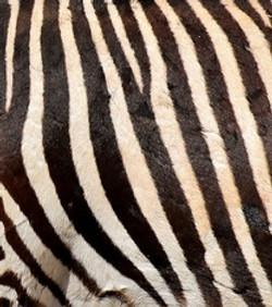 Animal Skin Picture Quiz