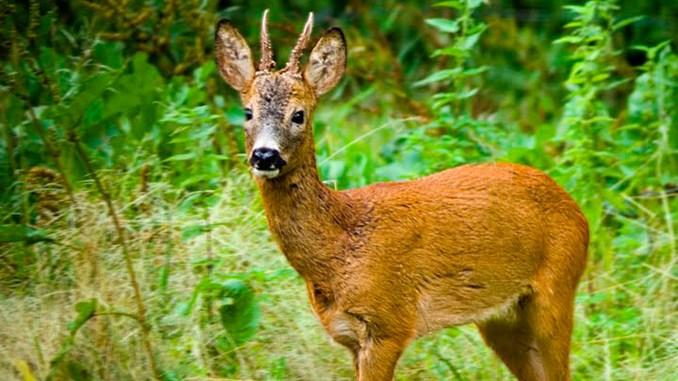 Mammals Picture Quiz