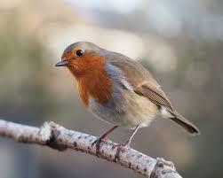 Bird Picture Quiz
