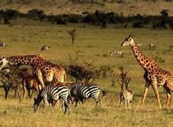 Kenya Physical Features