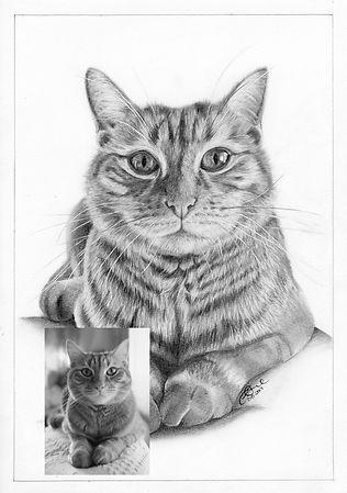 ollie cat fb.jpg