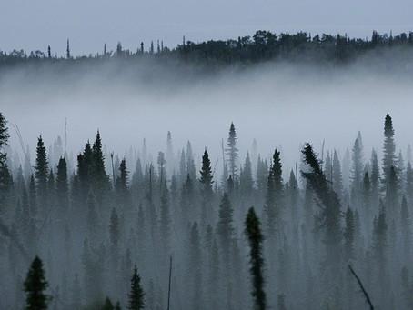 Spotlight Oil – Black Spruce