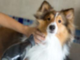Dog grooming stoke on trent, dog grooming hanley, dog grooming near me