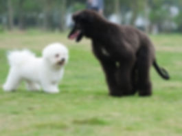 Dog Grooming Stoke, dog grooming stoke on trent, dog boarding