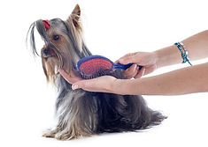 Professional dog grooming stoke