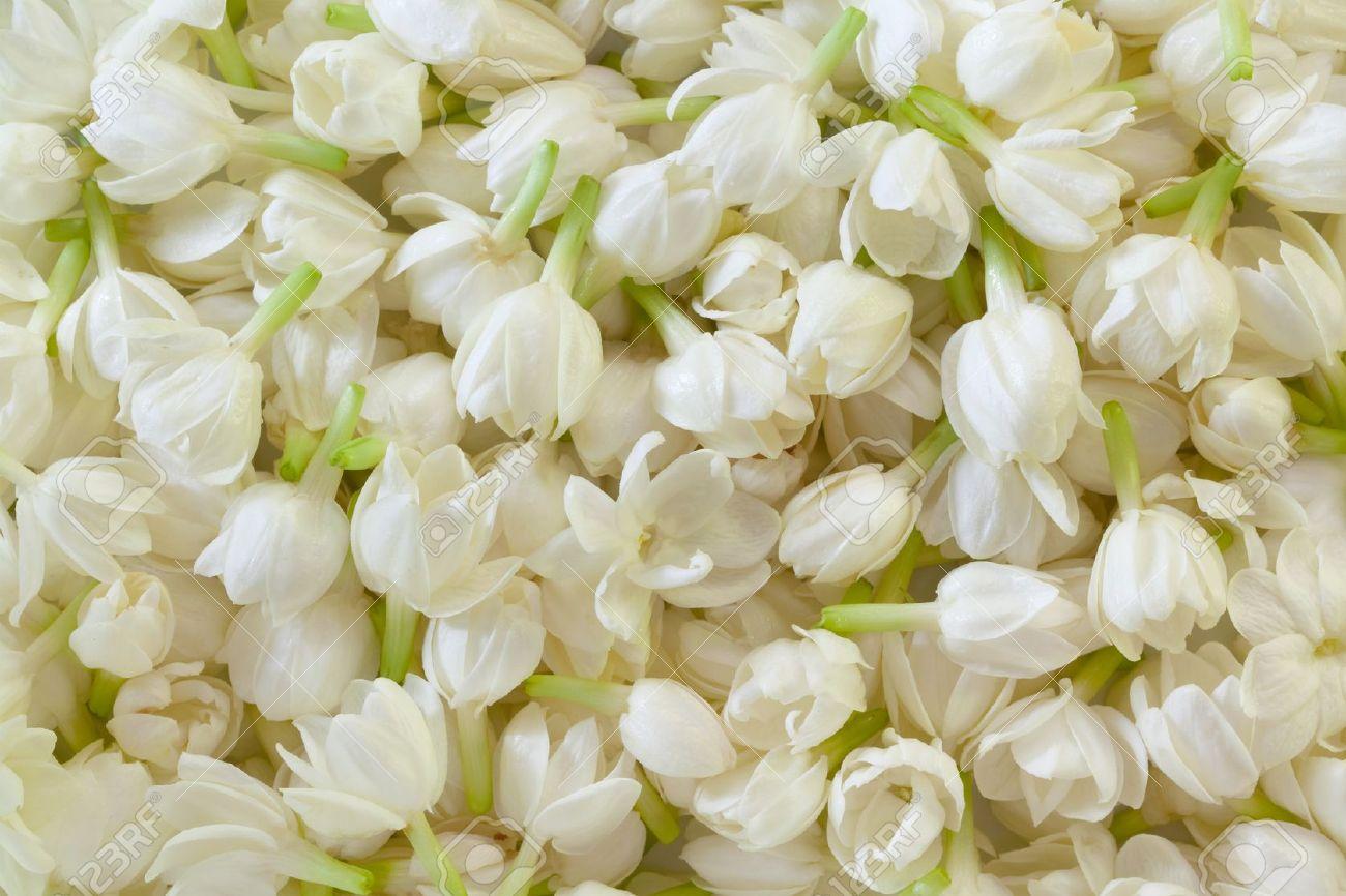 Jasmine original signature perfumes olfac3 izmirmasajfo