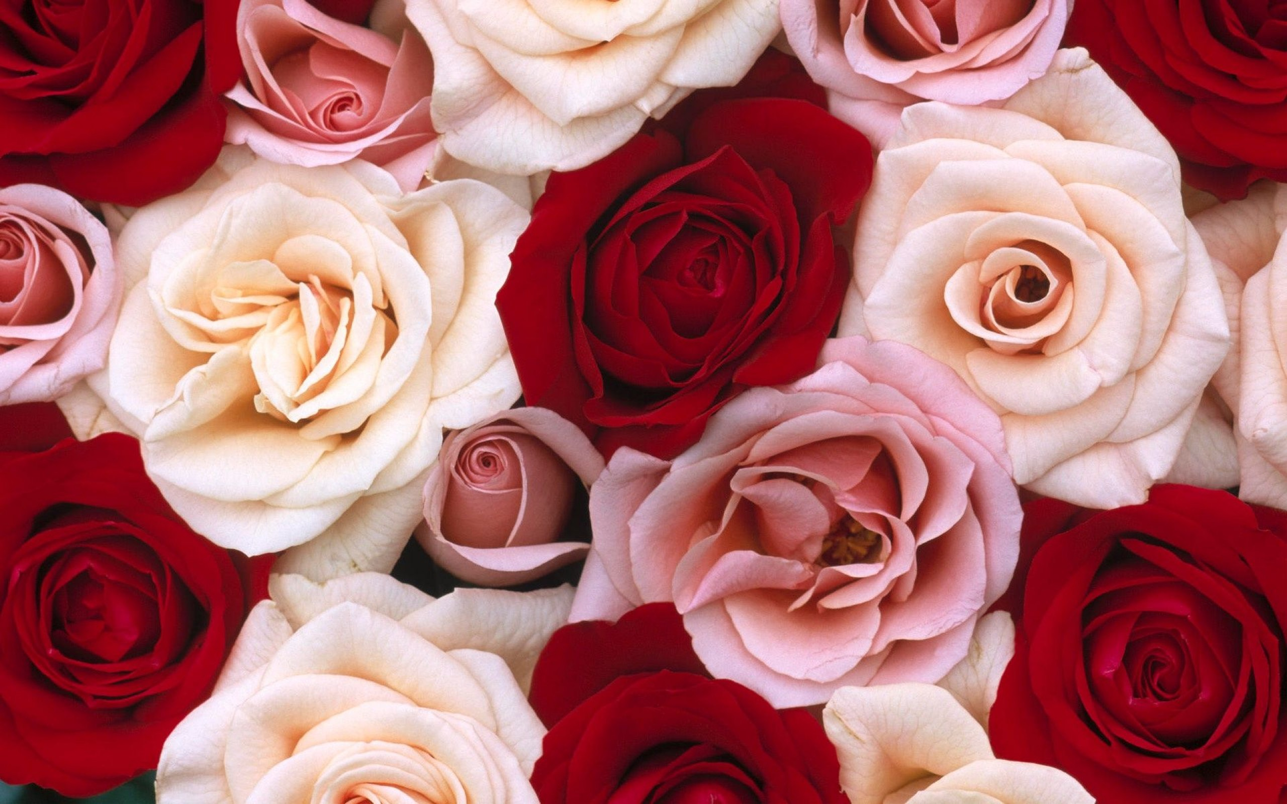 i rose up