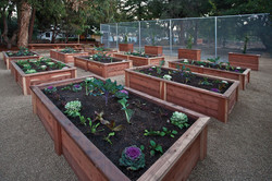 Garden & Building