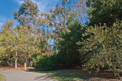 Steven Creek Trail & Trees
