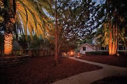 Evening Firepit & Trees