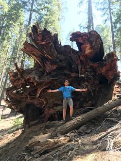 King's/Sequoia