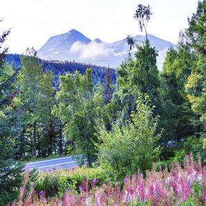 Trail Lake View | Mountain View