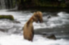 bears o-min.jpg
