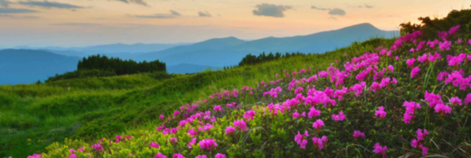 Fleur de Montagne miel reduit.jpg