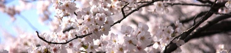 お花見レンタル
