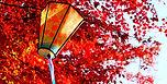 秋祭り.jpg