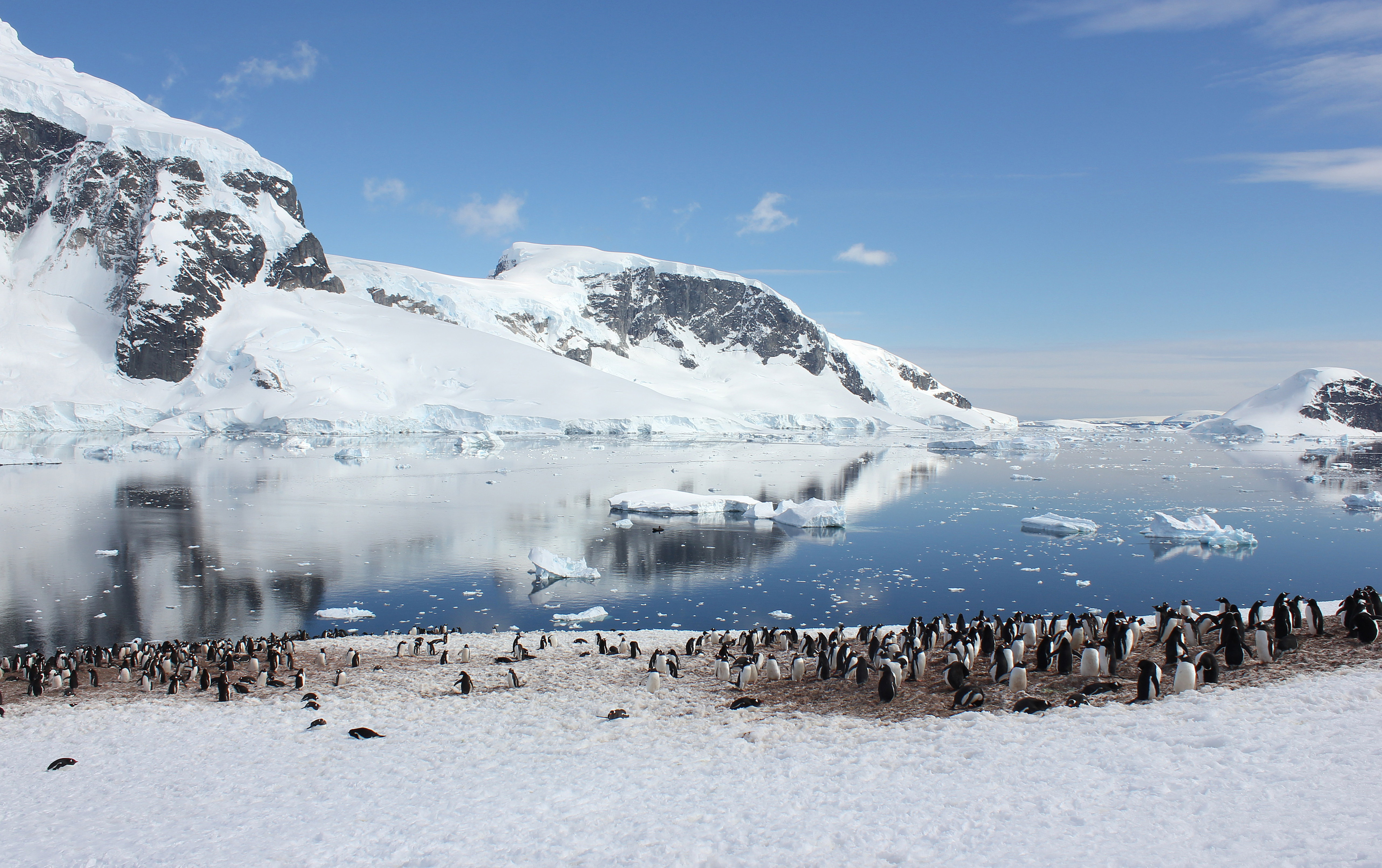 Penguin Colonies with a View