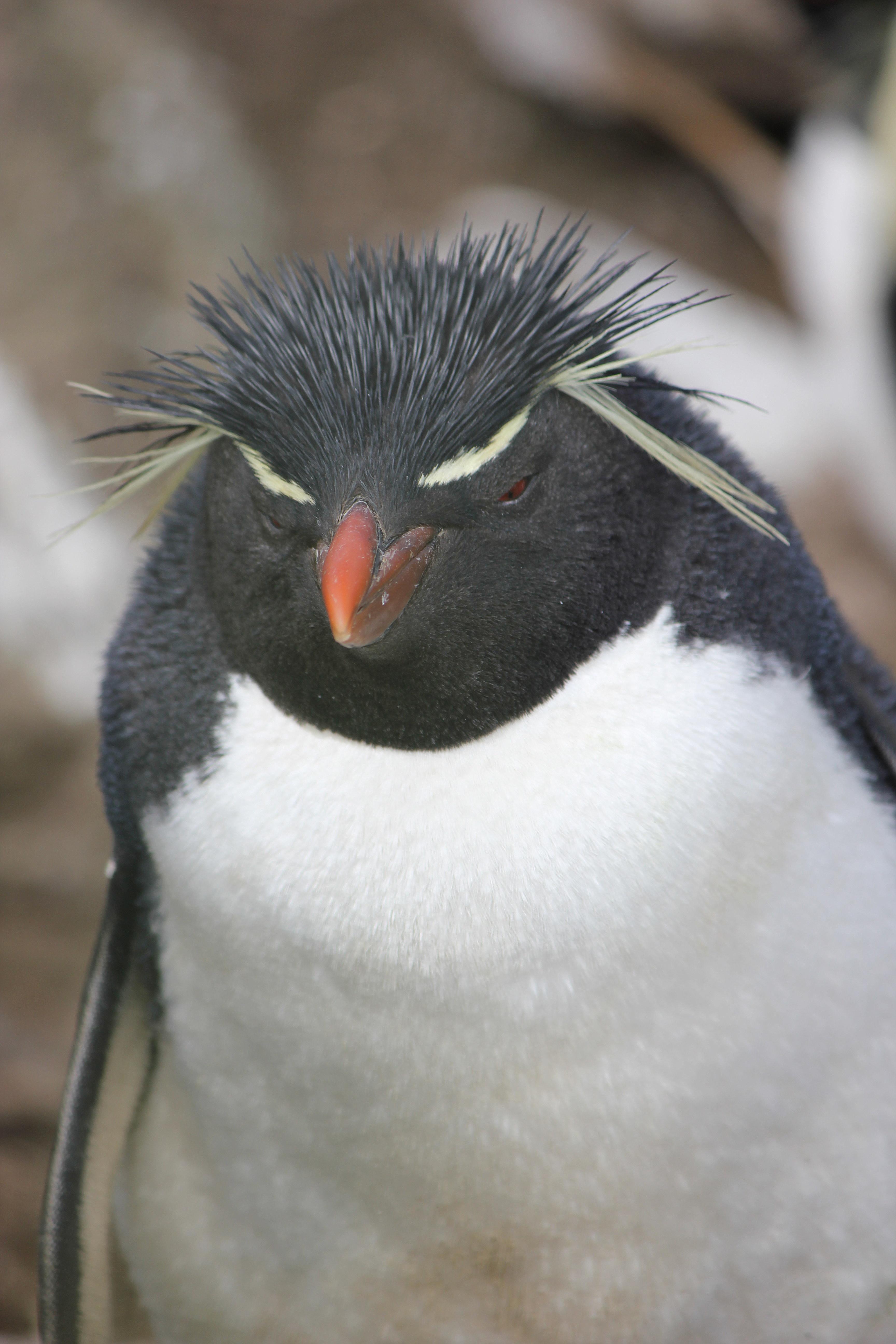 Professor Penguin