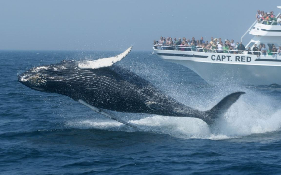 Take the Family on a Whale Watch
