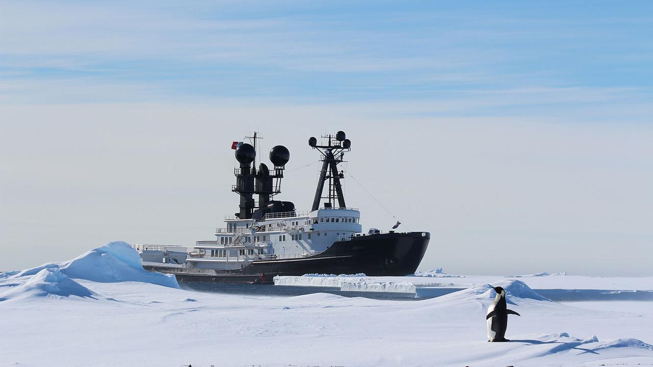 Arctic P in Antarctica